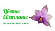 Svetlana-flowers (Цветы Светланы)
